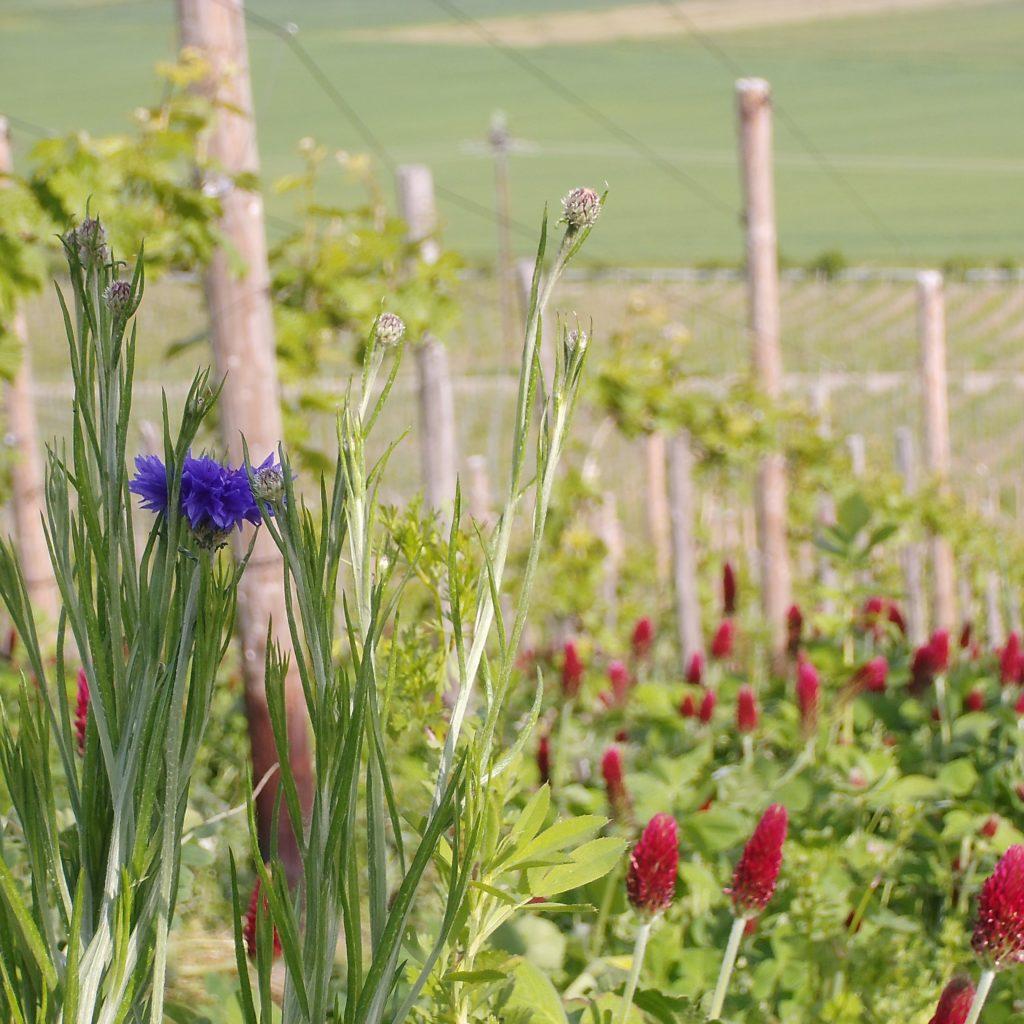Umweltschutz und Biodiversität  in der Lage Monzeler Paulinslay