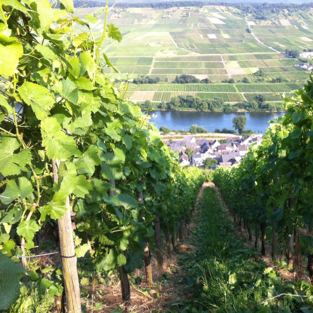 Steillagenweinbau zum Erhalt einer Kulturlandschaft