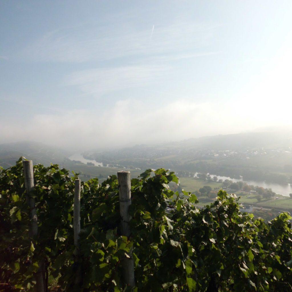 herbstlicher Blick vom Weingut zur Mosel
