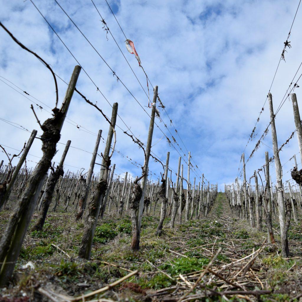 Steillage im Weingut an der Mosel
