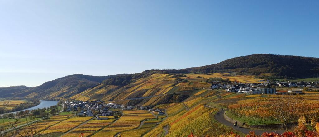 Weinort Osann-Monzel an der Mosel